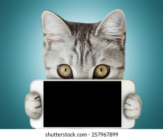 kitten holding mobile phone