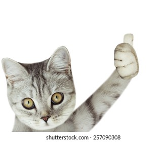 kitten holding poster