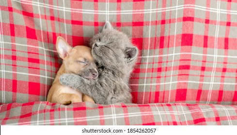 Kitten hugs toy terrier puppy and sleeps under blanket on a bed at home. Top down view. Empty space for text