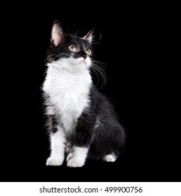 Kitten isolated on black background