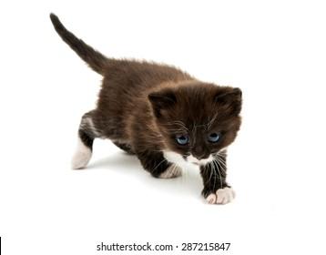 kitten isolated on white background