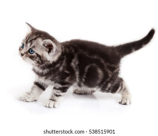 kitten isolated on white background.  little cat