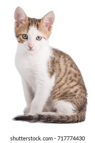 Kitten isolated on white background with clipping path
