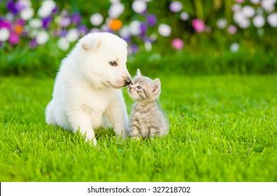Kitten kissing White Swiss Shepherd`s puppy on green grass