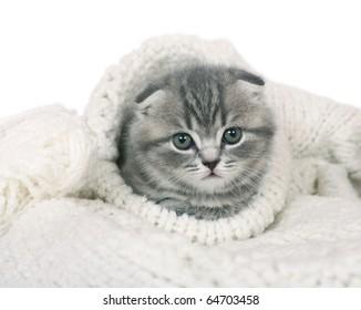 Kitten in a knitted collar.