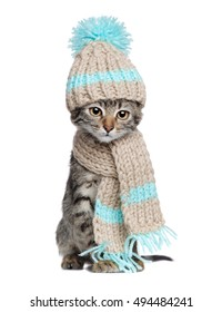 Kitten in knitted scarf and hat isolated on white background