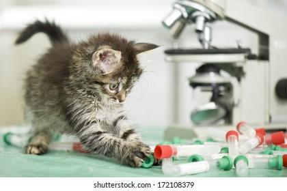 Kitten in laboratory