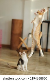 Kitten leaps in the air.Cat jumping and playing at home.Love cats and humans. Relationship,lovely comfortable cat.Stop motion photography.