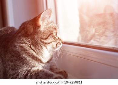 kitten lies on the windowsill