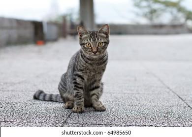 Kitten Looking At Camera