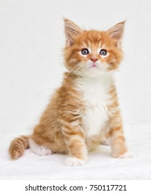 kitten looks