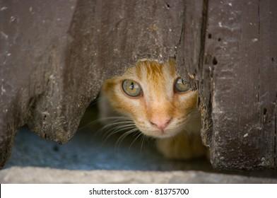 Kitten looks hidden across the hole of an old door