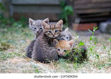 kitten  lovely family