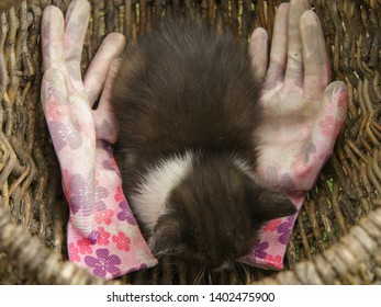 The kitten is lying in a basket with garden gloves. The kitten lives on the Russian dacha.
