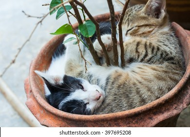 Kitten lying clay pots in town at Thailand