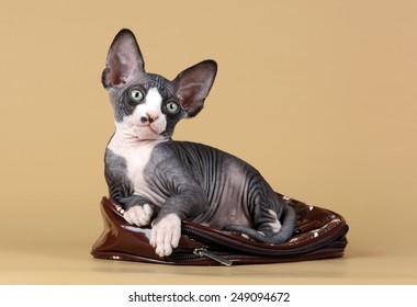 Kitten lying on handbag