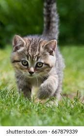 Kitten in a meadow