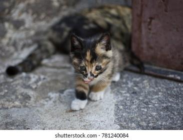 Kitten - Mount Hua, China
