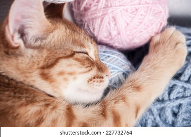 kitten next to a ball of yarn