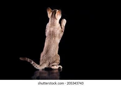 kitten on a dark background