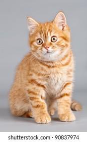 Kitten on grey background