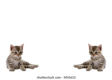 kitten on the left and right side, ideal for background