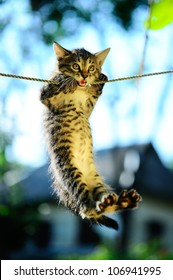 Kitten on a rope in the park.