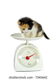 kitten on the scales isolated on white