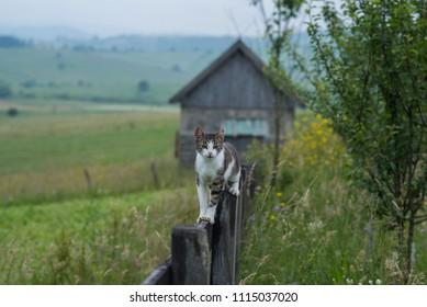 kitten on tin wooden fence