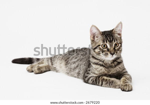 Kitten on white
