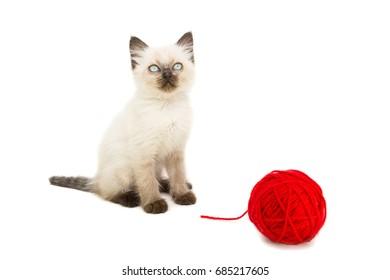 Kitten on white background,