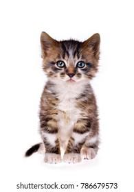 kitten on white background