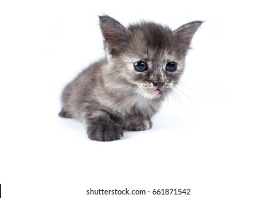 Kitten on white isolated background. Selective focus, shallow depth of field