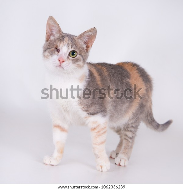 Kitten with only one eye left. Square image (1x1)