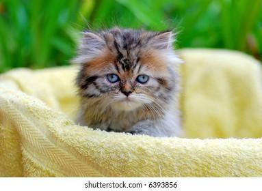Kitten outdoor