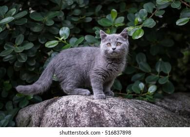 The kitten in an outdoor park