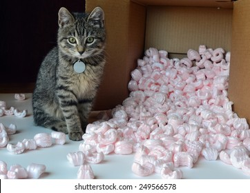 Kitten and packing peanuts