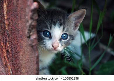 Kitten peeking from the rusty metal step of the rustic farmer's barn