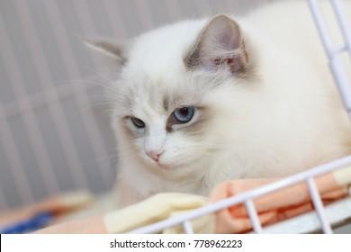 kitten in a pet store