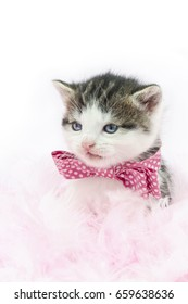 kitten with a pink ribbon necklace in pink feathers and white background