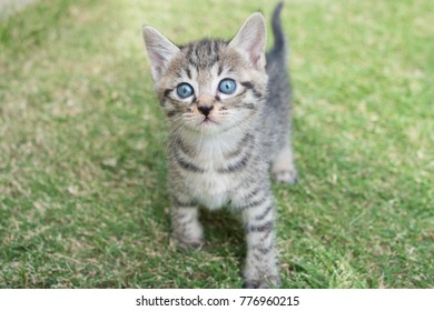Kitten play outside