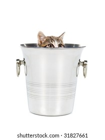 Kitten playing hide and seek in a champagne bucket