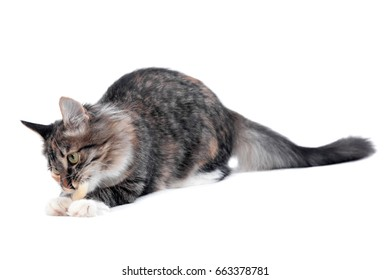 Kitten playing with toy on white isolated background