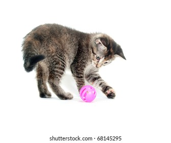 Kitten playing with toy on white background