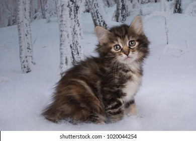 kitten playing in the winter forest