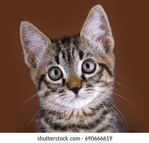 Kitten, portrait of the young cat
