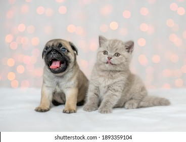Kitten and Pug puppy sit together on festive background