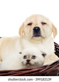 kitten and puppy beside