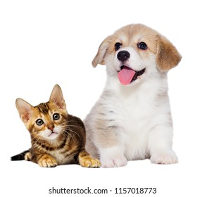 kitten and puppy are friends