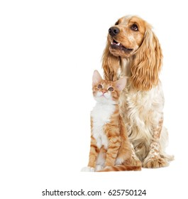 Kitten and puppy full-length look in the side on a white background